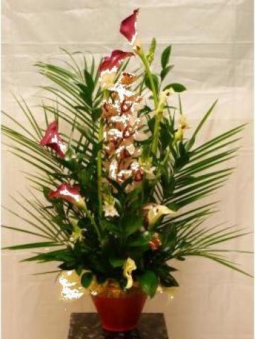 Aranjament floral orhidee, oritogalum si zantetedeschia de la Floraria Stil