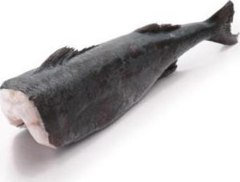 Peste Cod negru (Black Cod) eviscerat fara cap de la Expert Factor Foods Srl
