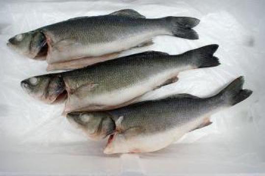 Biban de mare (seabass) eviscerat de la Expert Factor Foods Srl