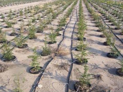 Furtun picurare 100 de la Imd Horticulture Systems Srl