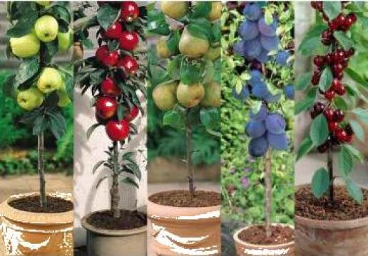 Puieti pomi fructiferi, puieti ornamentali, arbusti de la