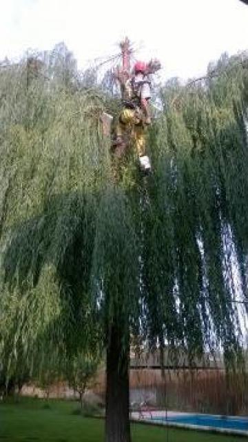 Toaletari copaci / arbori - alpinism utilitar de la A.u.r. Alpin Media Srl