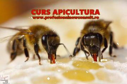 Curs apicultor de la Profesional New Consult
